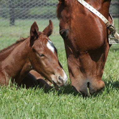 Newborn foal on waking