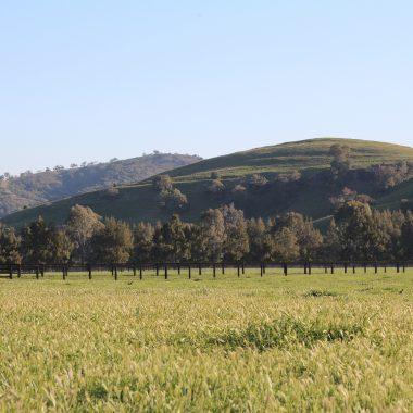Yearling Farm Paddock