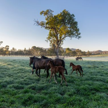 Balmoral paddocks - Mist early morning mare and foal at Segenhoe Stud. 23 September 2019  © The Image is Everything - Bronwen Healy & Darren Tindale Photography . Picture : Darren Tindale - The Image is Everything.