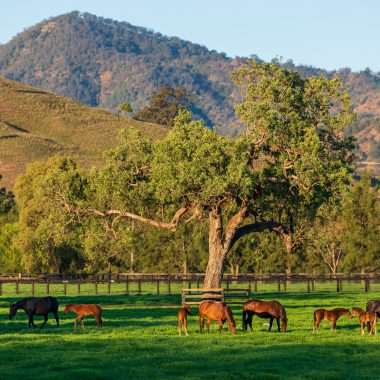 Mares and Foals in a paddock at Balmoral at Segenhoe Stud - General View at Segenhoe Stud. 23 September 2019  © The Image is Everything - Bronwen Healy & Darren Tindale Photography . Picture : Darren Tindale - The Image is Everything.