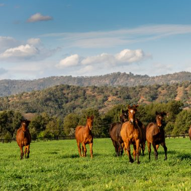 Yearlings graze in the afternoon light at Segenhoe Stud.  22 September 2019  © The Image is Everything - Bronwen Healy & Darren Tindale Photography . Picture : Darren Tindale - The Image is Everything.